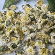 dried white chrysanthemum flower white chrysanthemum