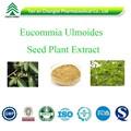 Gmp approvisionnement du fabricant vente chaude de qualité supérieure Eucommia Ulmoides semences