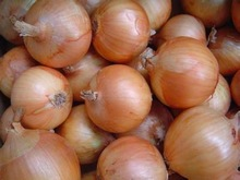 price of fresh onion yellow and red