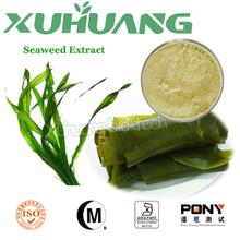 Ascophyllum nodosum/alghe estratto solubile in polvere/estratto di alghe in polvere