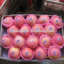 New crop Yantai Grade 1 Apple from China