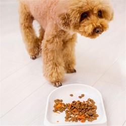 smart pet feeder, pet food bowl, pet remote control food feeder