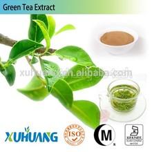 ISO Factory supply 95% 98% Tea Polyphenols Green Tea Extract,green tea extract powder