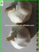 China is best, the most fresh White garlic,PURE GARLIC!