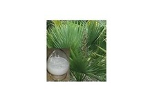 GMP Manufacture Hot selling Pure & Organic Saw Palmetto Extract(25%,45% Fatty acids)