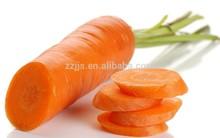 wholesale carrots fresh carrots for sale import fresh carrots