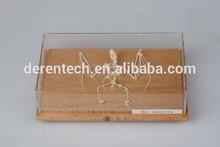Animal skleton, Animal skeleton specimen, skeleton for teaching