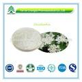 la fábrica del gmp suministro orgánicos selinum japenious semilla