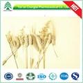 HPLC/UV GMP polvo de extracto de pasto de avena de fábrica, pureza 70,0%