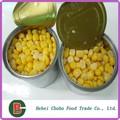 Ngô ngọt đóng hộp/đóng hộp màu vàng bắp ngô ngọt hạt nhân/ngô ngọt toàn hạt nhân
