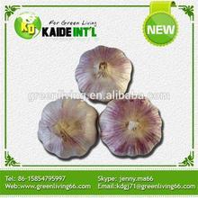 China Purple Garlic In Bulk
