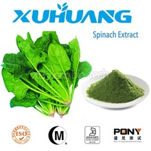 Food Grade Natural Spinach Extract,Spinach P.E.,Spinach Powder Extract
