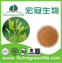 best price Green Tea Extract 30% polyphenols / Green Tea Extract 45 EGCG