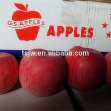 Fresh red Fuji apple Apple Type and Pome Fruit Product Type fuji apple