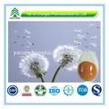 el certificado gmp popular a base de hierbas raíz de diente de león