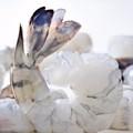 el mejor precio para congelados camarón vannamei