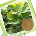 Seca Ginkgo Biloba hojas de extracto en polvo, 24% de raíz glucósidos, 6% terpeno Lactories