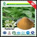 Quente e natural de alta qualidade horseradish pó do extrato com 4: 1,10:1 pureza