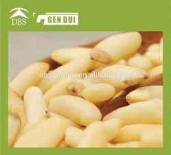 white pine nuts / Pine nut kernel
