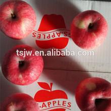 Gansu Tianshui Fuji Apple Fruit Crop 2015