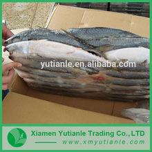 Trustworthy china supplier Fish Steak