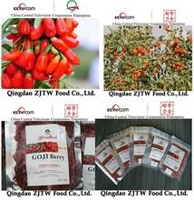 2015 Factory supply barbary wolfberry goji fruit in bulk