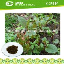 High quality Polygonum Cuspidatum Extract Powder , Resvertrol 98% ,GMP factory