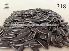 Sunflower Seeds 5135