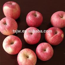 Chinese fresh red fuji apple price farm export good quality Chinese Fuji Apple