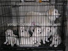 Pet Cage / Fencing / Dog Kennels