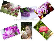 Floral scent fragrance oil for air-freshener, soaps, shower gel, shampoo, etc