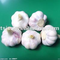 fresh / frozen peeled garlic cloves for sale