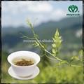 gmp té orgánico moyeam a base de hierbas de la medicina
