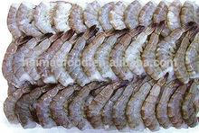novo camarão congelado nome científico de camarão vannamei