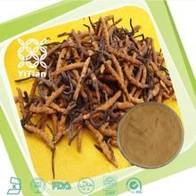 100% Natural Cordyceps polysaccharide Powder/Cordyceps Extract