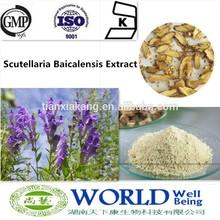 GMP Factory 100% Natural 80%-98%Baicalin Radix Scutellariae Extract Scutellaria Baicalensis Extract