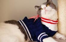 cute persian clothing warm knit cat clothing pet animal clothing