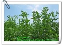 100% Pure Natural Stevia Extract/Organic Stevia Powder/Stevia Extract Rebaudioside A Stevioside