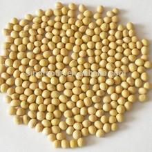 Secas soja amarelos nome científico de o feijão