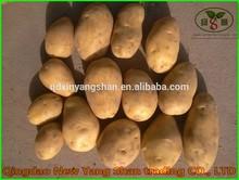 (HOT)Fresh Potatoes Size:150g,200g/holland potato seeds
