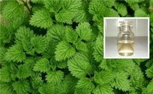 Natural peppermint Oil CP standard plant extract