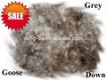 Ganso cinza para baixo Material e padrão lavado pato goos pena e para baixo