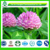 Wholesale Red clover extract isoflavones powder