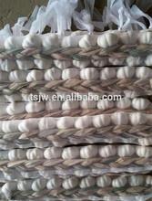 Chinese Fresh Garlic for export