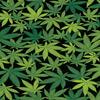 Cannabis Leaf Hydrographic Film Water Transfer Printing Film