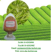 Natural Green Tea Extract/Black tea extract/green tea powder 10:1