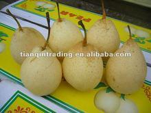 2012 China fresh ya pear