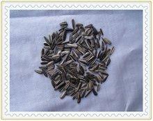 uccelli semi di girasole strisce