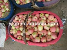 fresh royal gala apple 2012