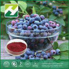 Bilberry Extract anthocyanin Vaccinium myrtillus